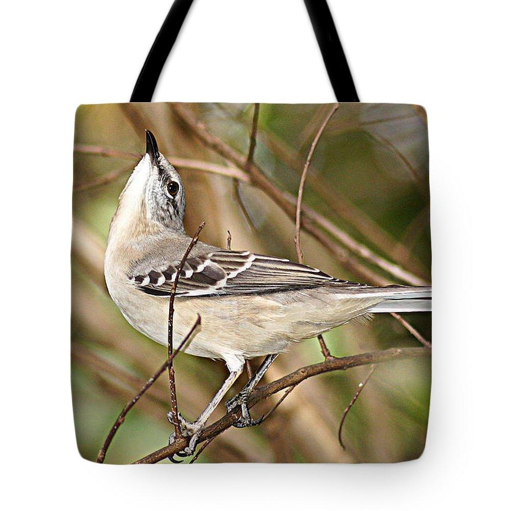 Mockingbird Tote Bag featuring the photograph Florida Mockingbird by Paul Wilford