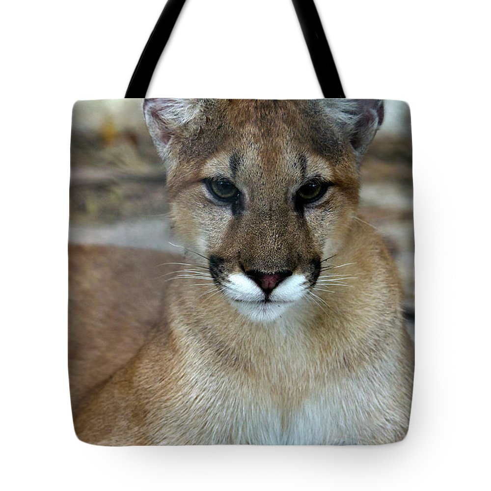 Animal Themes Tote Bag featuring the photograph Florida Panther, Endangered by Mark Newman