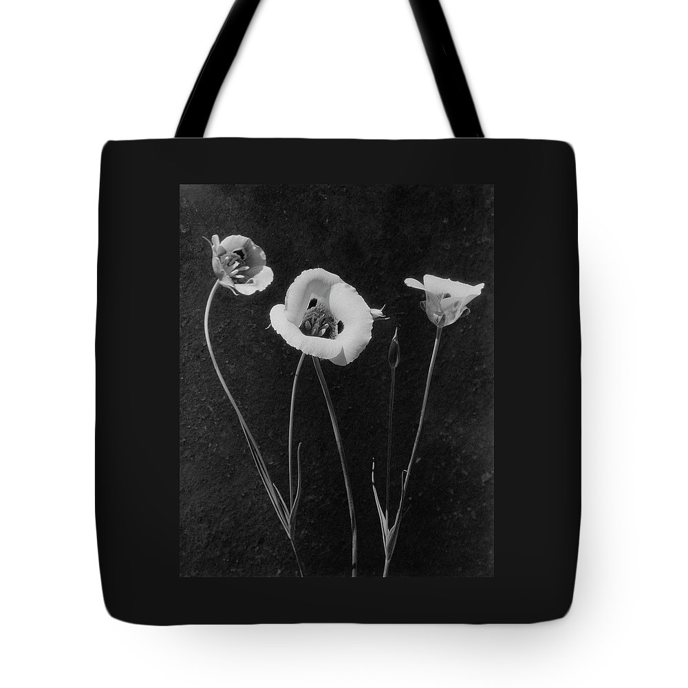 Exterior Tote Bag featuring the photograph Flowers In Louise Beebe Wilder's Garden by Harry G. Healy