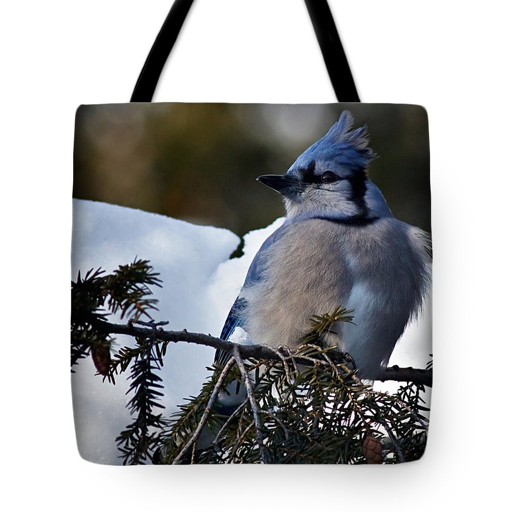 Blue Jay Tote Bag featuring the photograph Fluffy Blue Jay by Rick Mousseau
