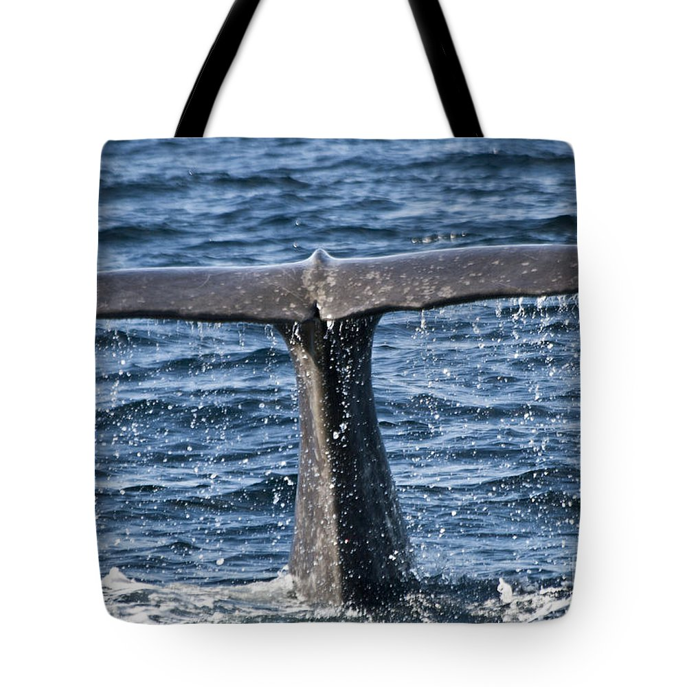 Whale Tote Bag featuring the photograph Flukes Of A Sperm Whale 2 by Heiko Koehrer-Wagner
