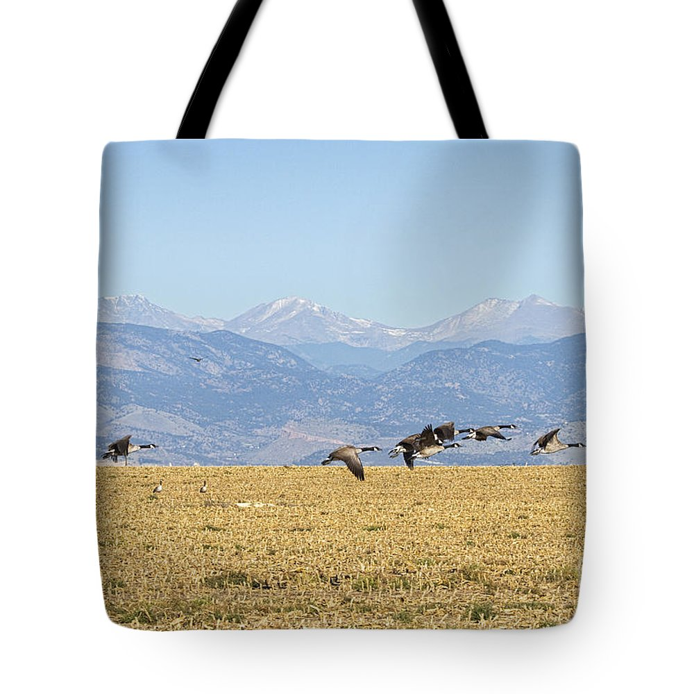 Cackling Goose Tote Bag featuring the photograph Flying Canadian Geese Rocky Mountains 2 by James BO Insogna
