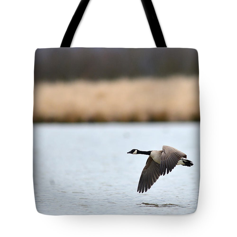 Water Tote Bag featuring the photograph Flying Low by Randy Giesbrecht