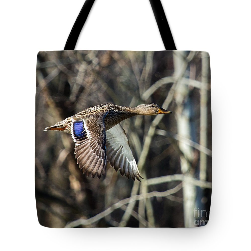 Mallard Tote Bag featuring the photograph Flying Mallard by Flying Turkey