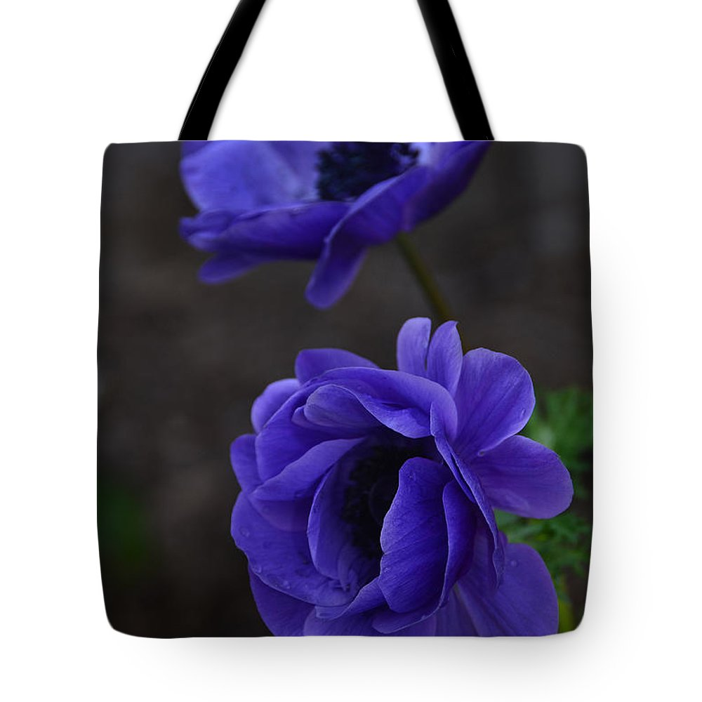 Poppies Tote Bag featuring the photograph Focused by Debby Pueschel