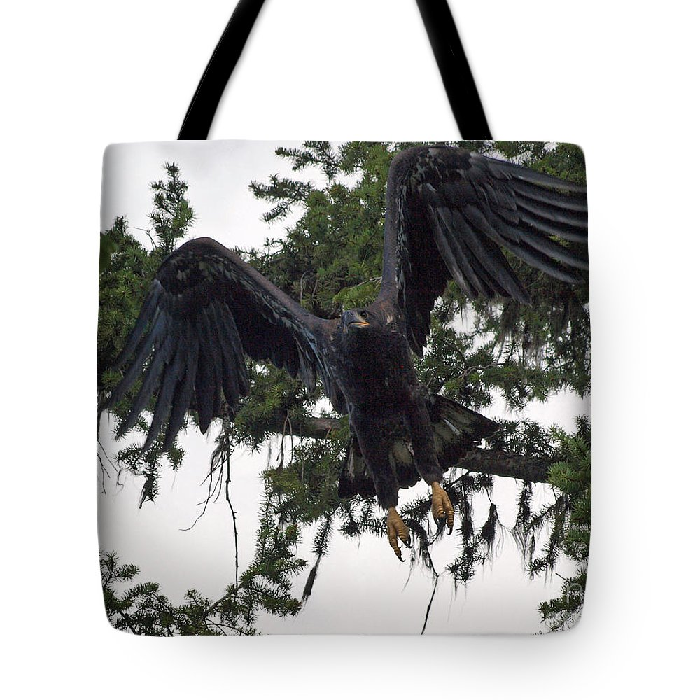 Hawk Tote Bag featuring the photograph Focused On Prey by Vivian Martin
