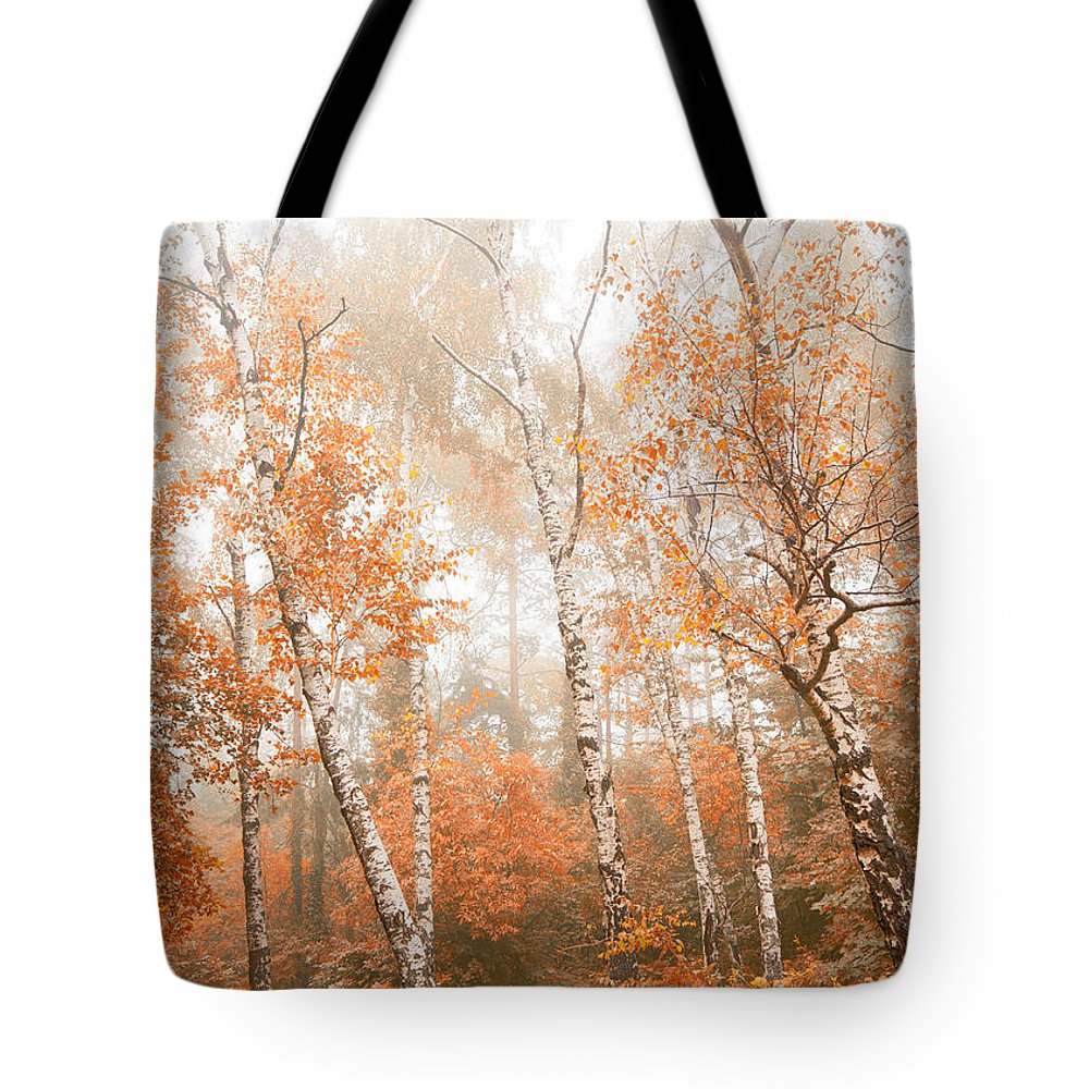 Wilderness Tote Bag featuring the photograph Foggy Autumn Aspens by Eti Reid