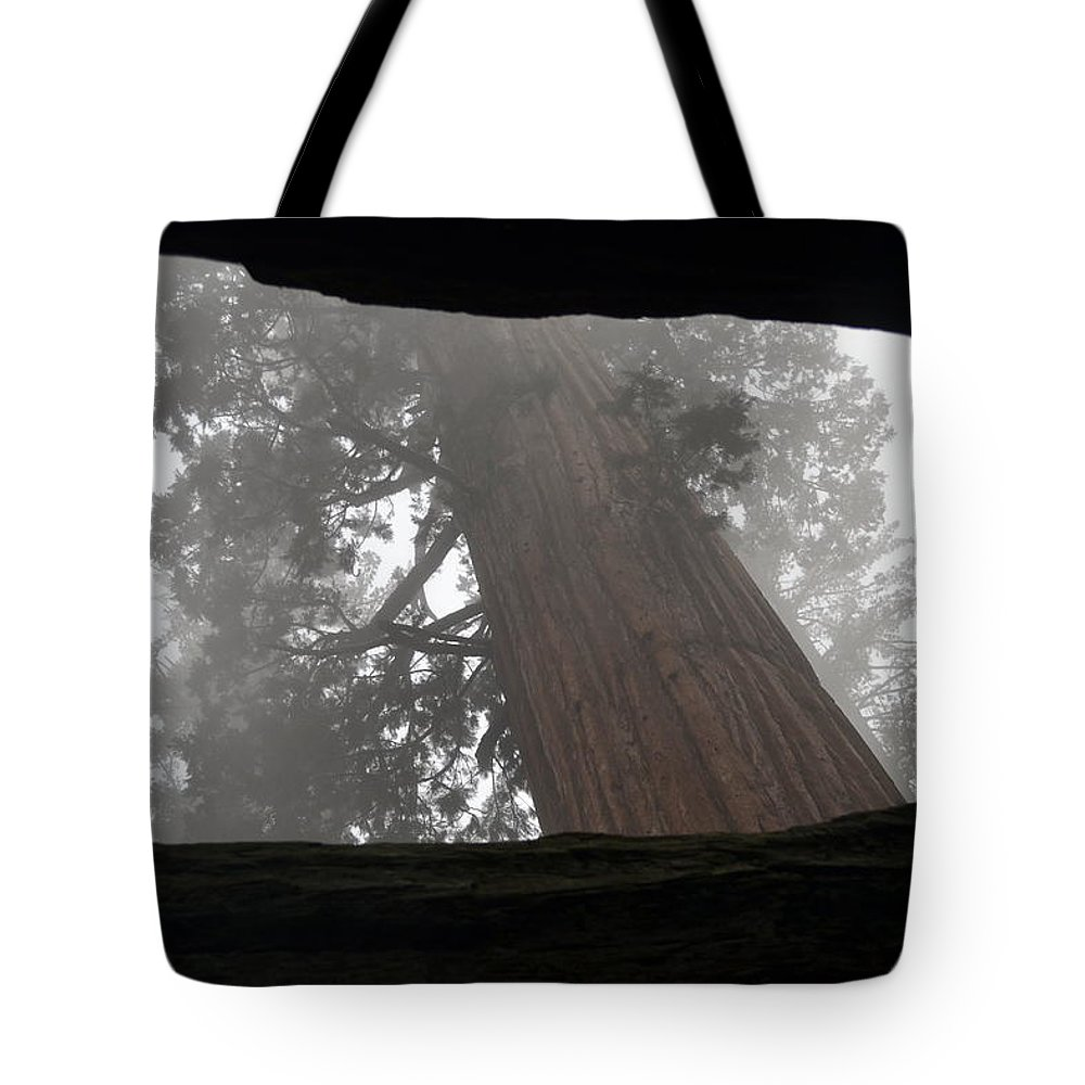 Sequoia Tote Bag featuring the photograph Foggy Morning Sequoias by Christine Owens