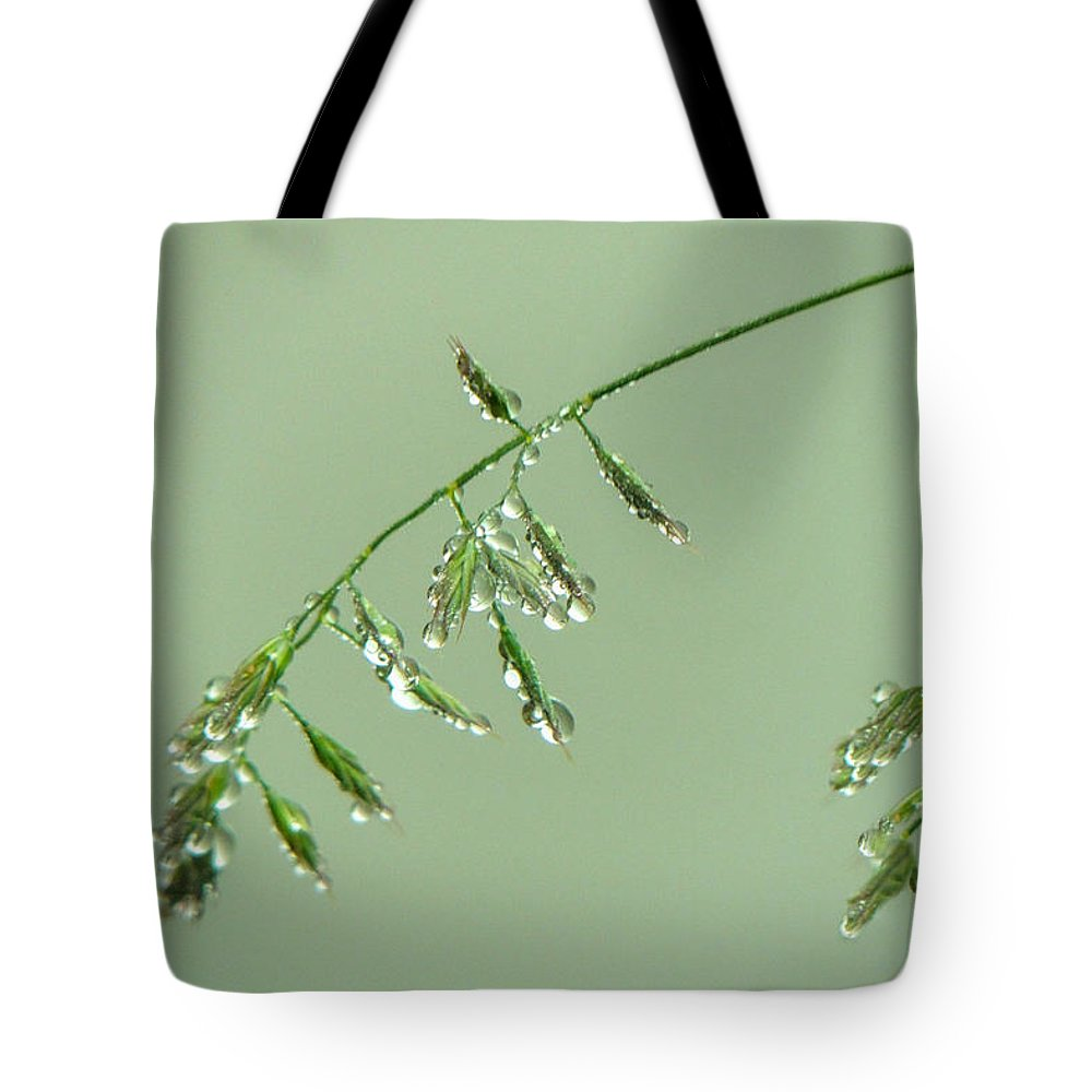 Europe Tote Bag featuring the photograph Foliage On Mount Pilatus by Marilyn Burton