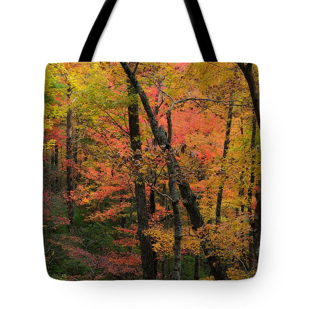Cades Cove Tote Bag featuring the photograph Forest Blush by Charlie Choc