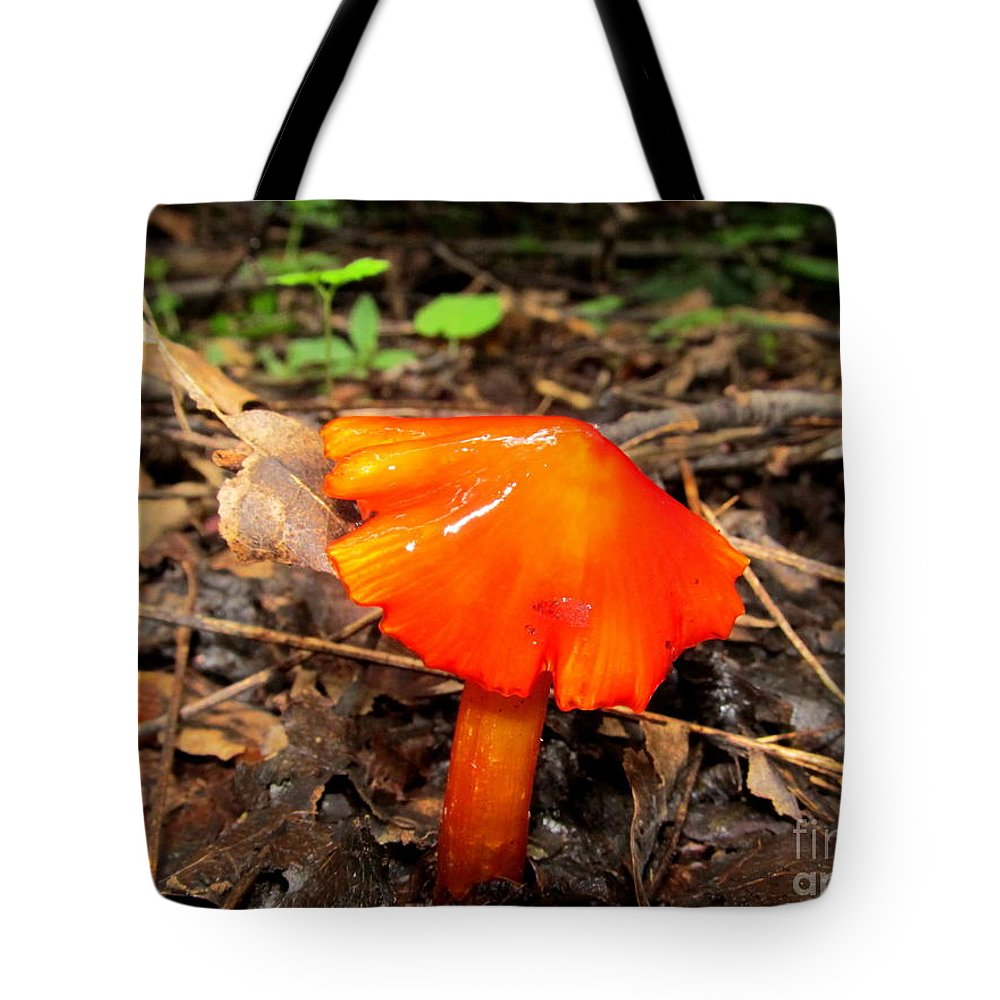 Brilliant Mushrooms Red Mushrooms Red Fungi Bright Orange Fungi Colorful Fungi Forest Flare Preserve Biodiversity Forest Ecosystem Flora Rare Nature Rare Fungi Rare Mushrooms Exotic Flora Exotic Fungi Divine Design In Nature Prints Fine Art America Noth American Mushrooms Of The Mid Atlantic Northeast Appalachian Fungi Species Hygrocybes Beautiful Beings Of Natural Design Concepts Seasonal Forest Fungi Decidious Woodland Flora Mycology Sierra Club Nature Conservancy Tote Bag featuring the photograph Forest Fungi Flare by Joshua Bales