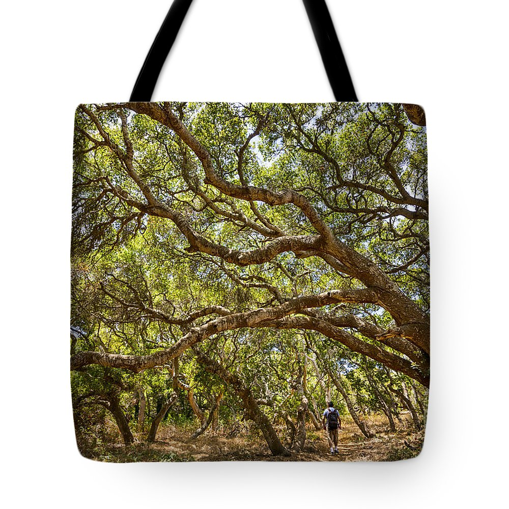 Los Osos Oak State Natural Reserve Tote Bag featuring the photograph Forest Stroll - The Magical And Mysterious Trees Of The Los Osos Oak Reserve. by Jamie Pham
