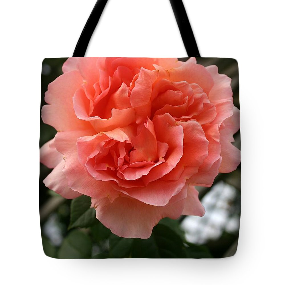 Rose Tote Bag featuring the photograph Formidable Bloom by Christiane Schulze Art And Photography