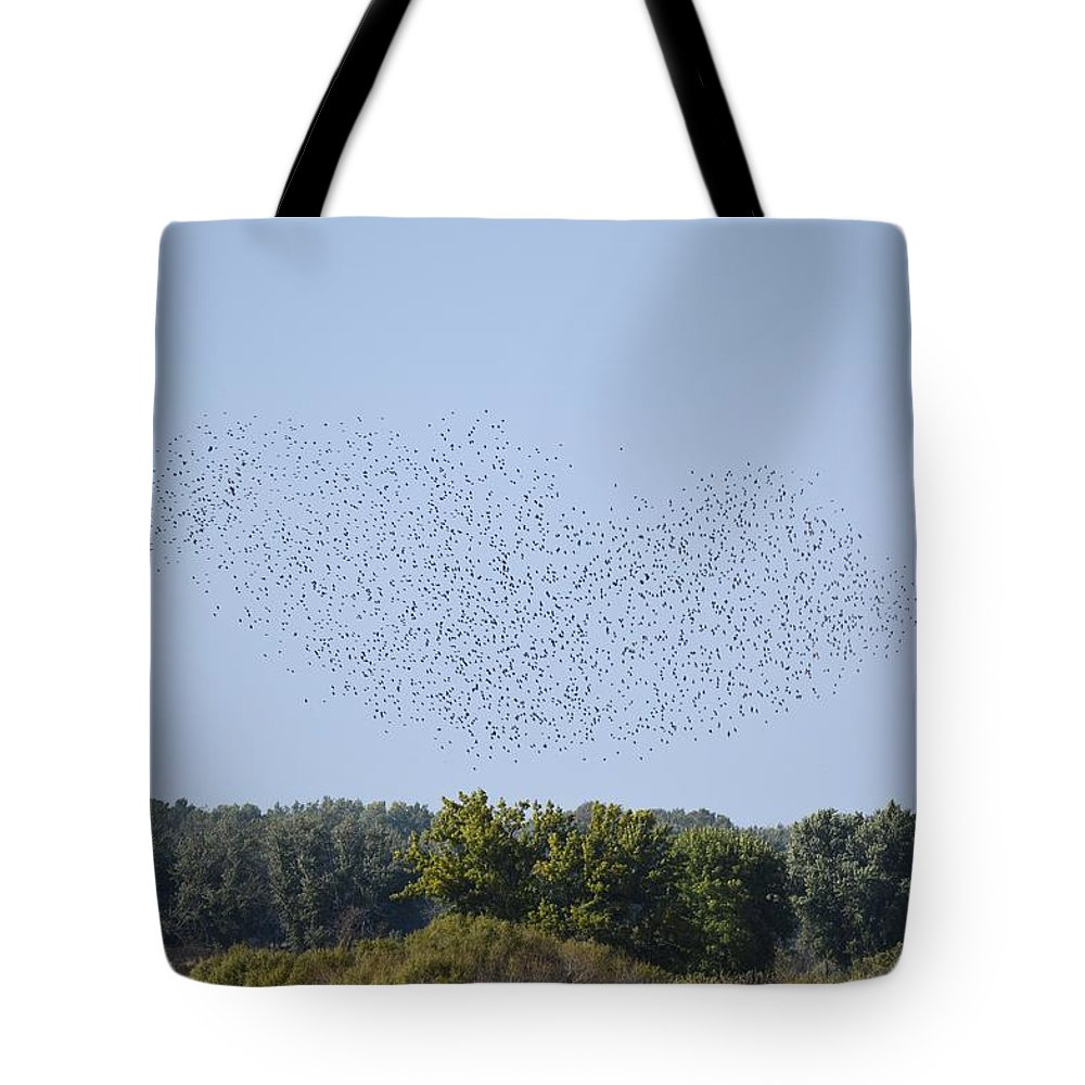 Birds Tote Bag featuring the photograph Four And Twenty Blackbirds by Bonfire Photography