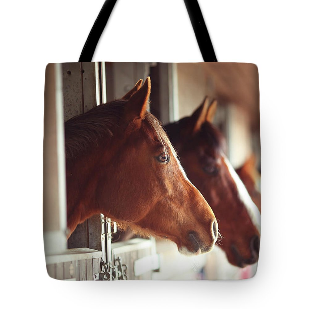 Horse Tote Bag featuring the photograph Four Horses In Stables by Olivia Bell Photography