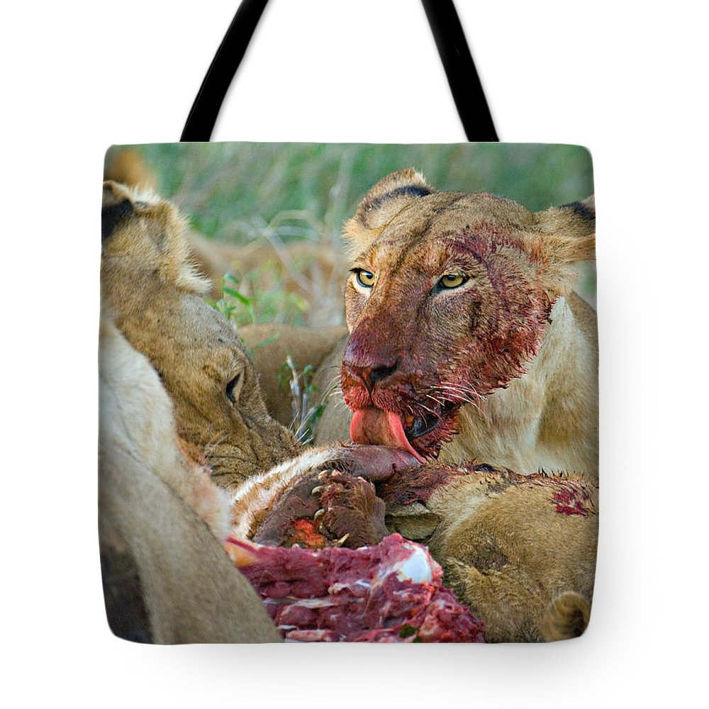 Photography Tote Bag featuring the photograph Four Lioness Eating A Kill, Ngorongoro by Panoramic Images