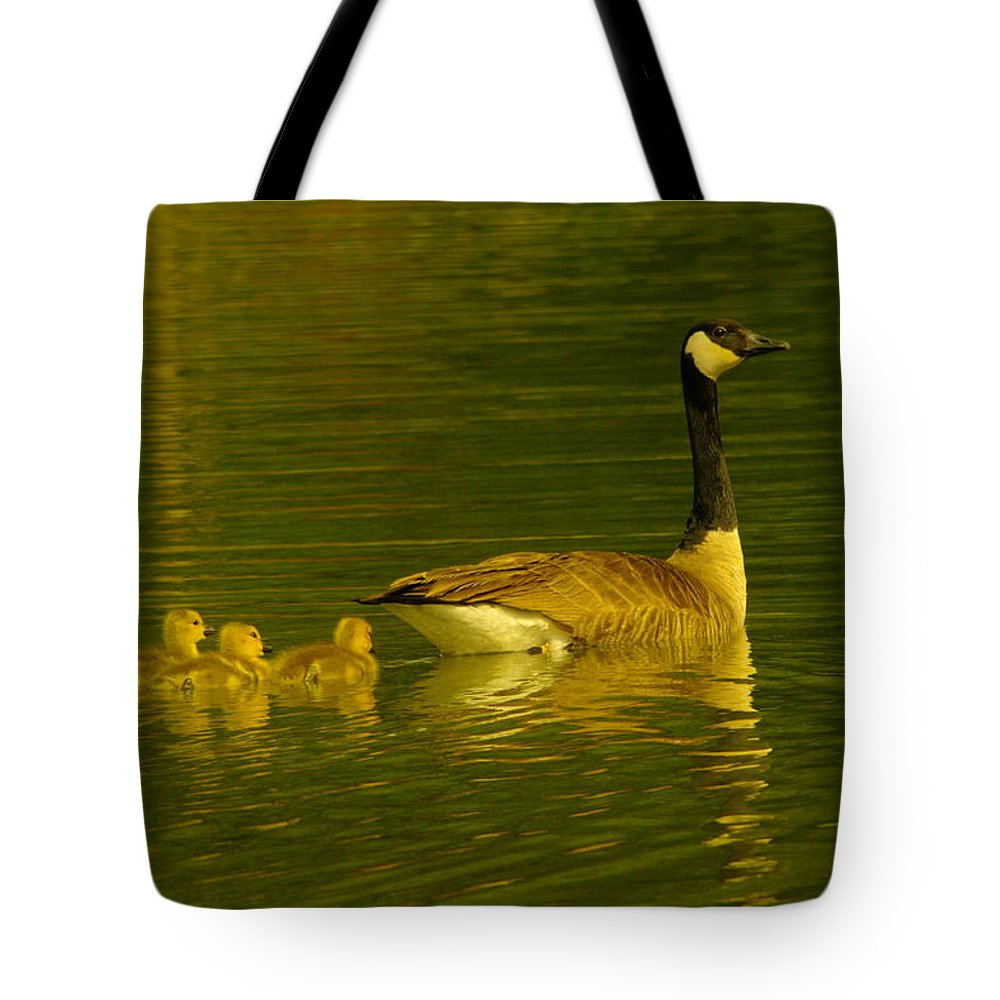 Birds Tote Bag featuring the photograph Four Little Miracles by Jeff Swan