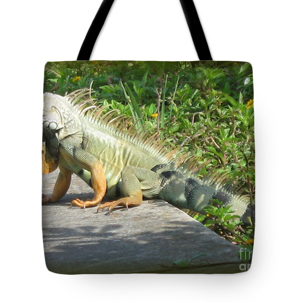 Iguana Tote Bag featuring the photograph Framed Iguana by Christiane Schulze Art And Photography