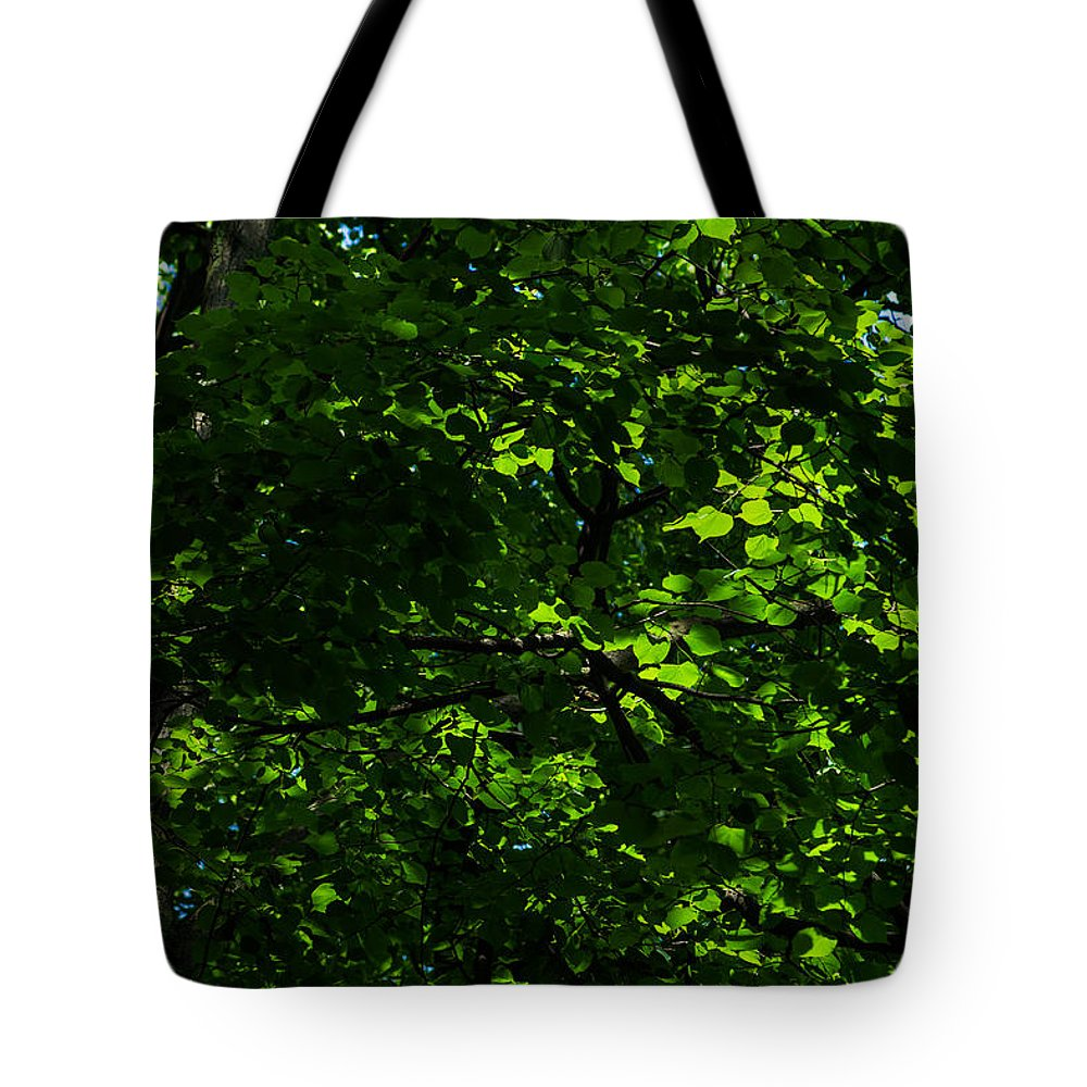Abstract Tote Bag featuring the photograph Fresh Linden Tree Foliage - Featured 2 by Alexander Senin