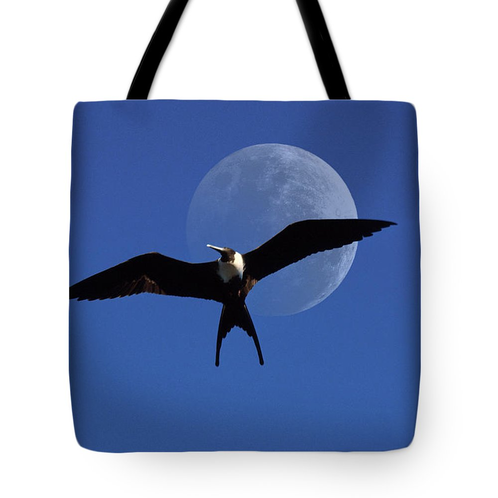 Frigate Tote Bag featuring the photograph Frigatebird Moon by Jerry McElroy