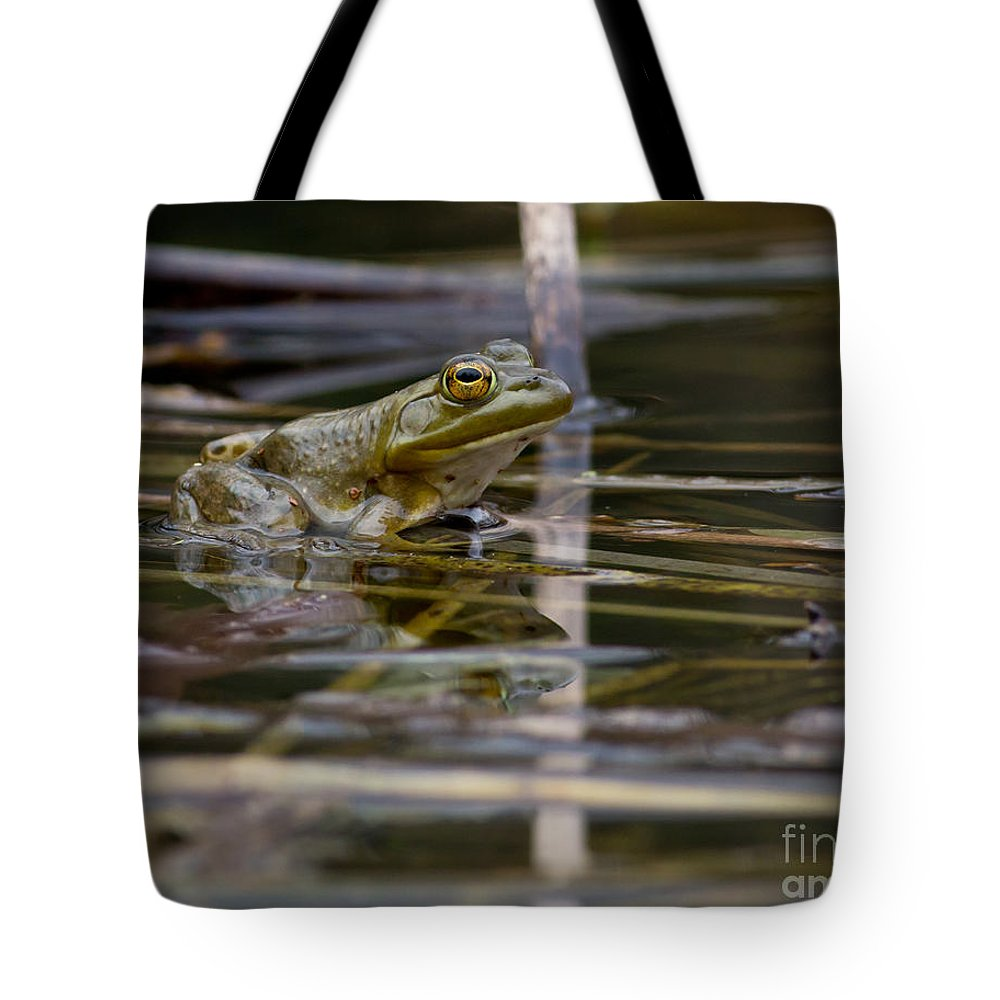 Frog Tote Bag featuring the photograph Frog II by Douglas Stucky