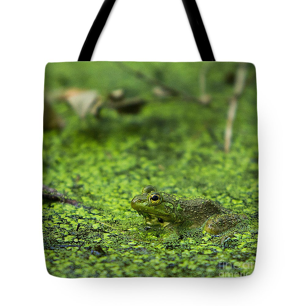 Frog Tote Bag featuring the photograph Frog In Swamp 2 Of 3 by Brad Marzolf Photography