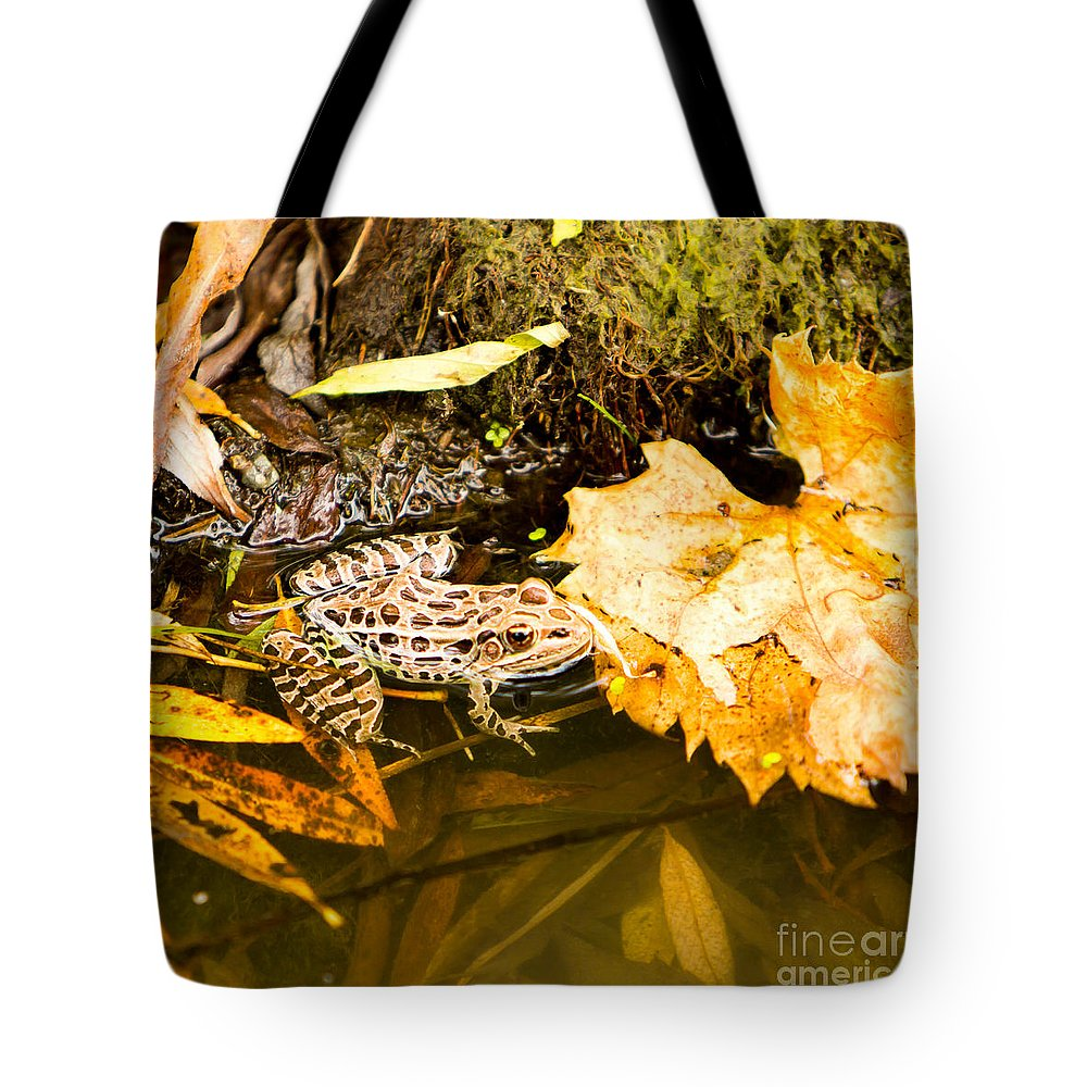 Frog Tote Bag featuring the photograph Frog In Water 3 Of 3 by Brad Marzolf Photography
