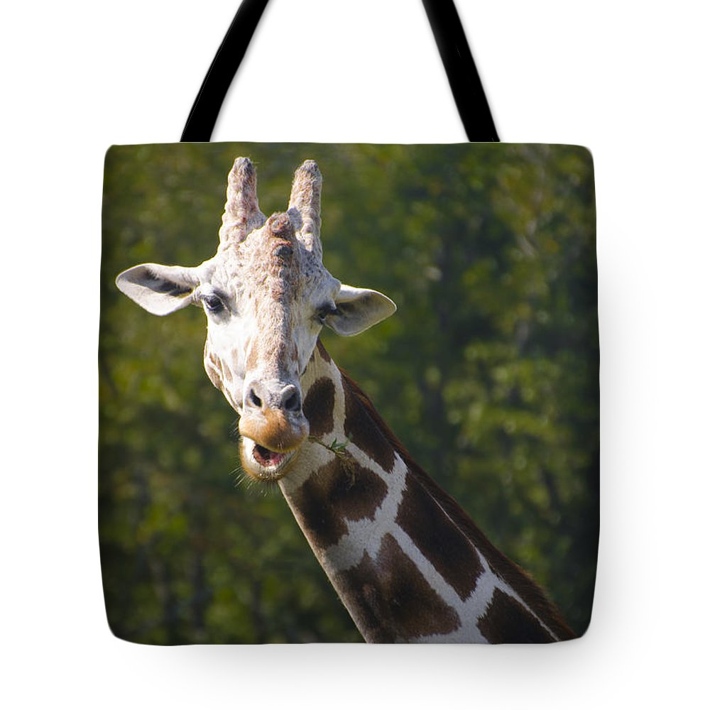 Giraffe Tote Bag featuring the photograph From The Top by Bill Cannon