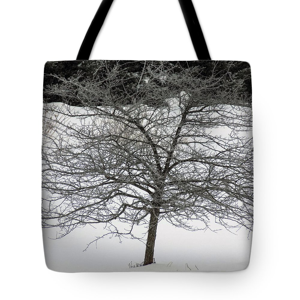 Hawthorne Tote Bag featuring the photograph Frost On The Hawthorne by William Tasker