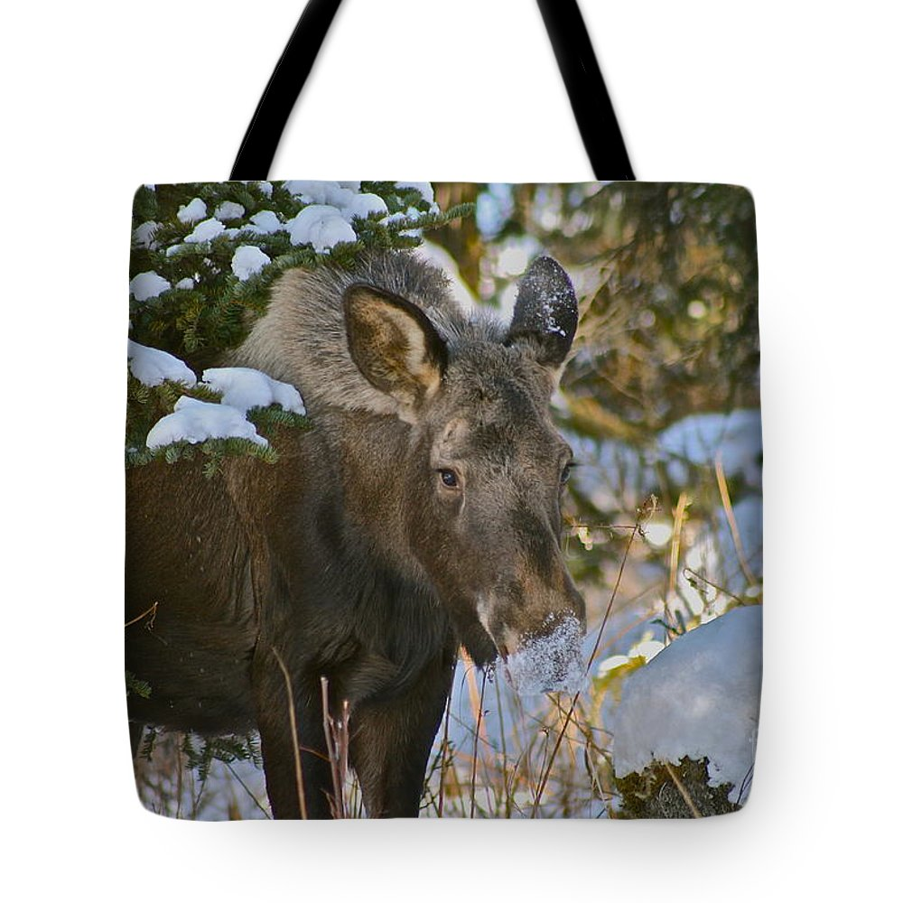 Moose Tote Bag featuring the photograph Frosty Nose by Rick Monyahan