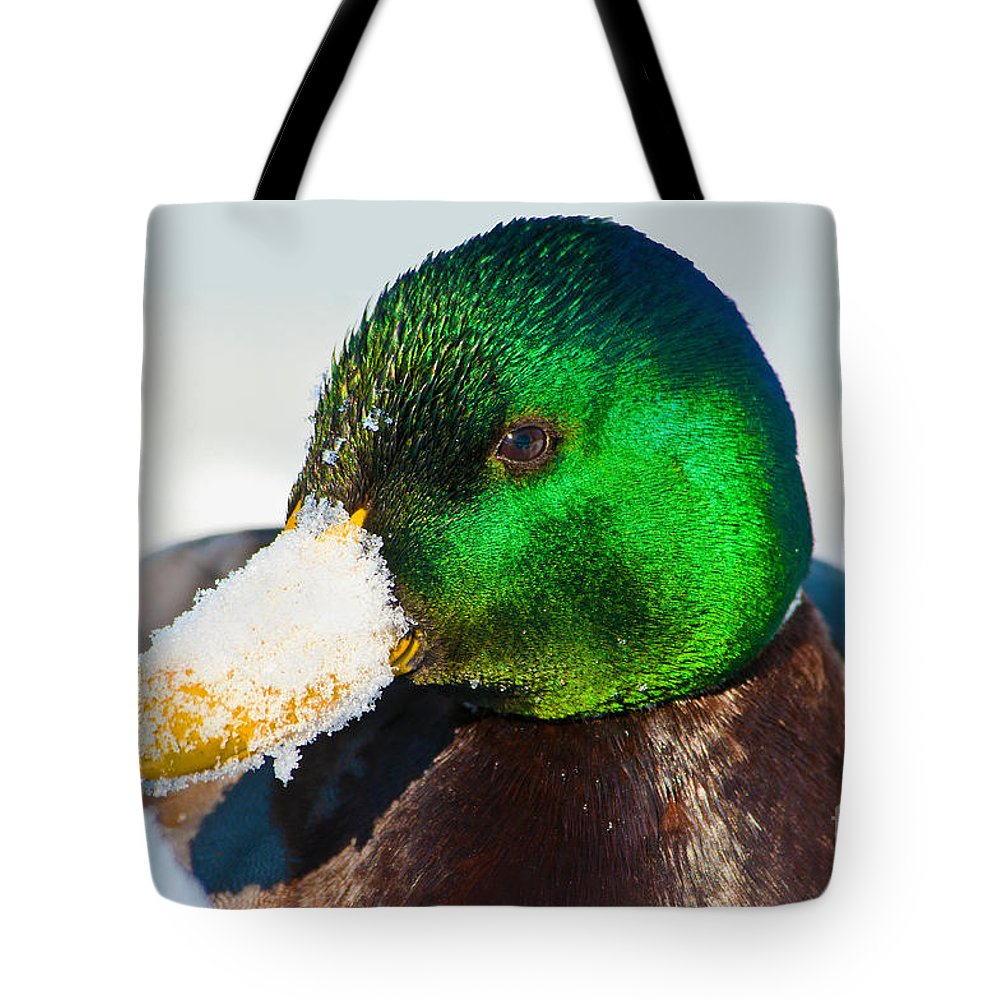 Duck Tote Bag featuring the photograph Mallard On Ice by Regina Geoghan