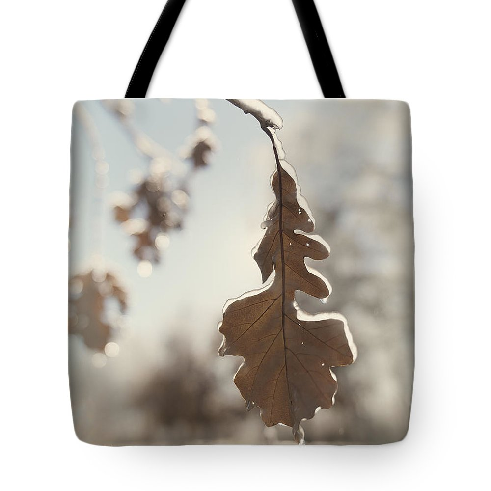 Nature Tote Bag featuring the photograph Frozen Oak Leaf Abstract Nature Detail by Oleksiy Maksymenko