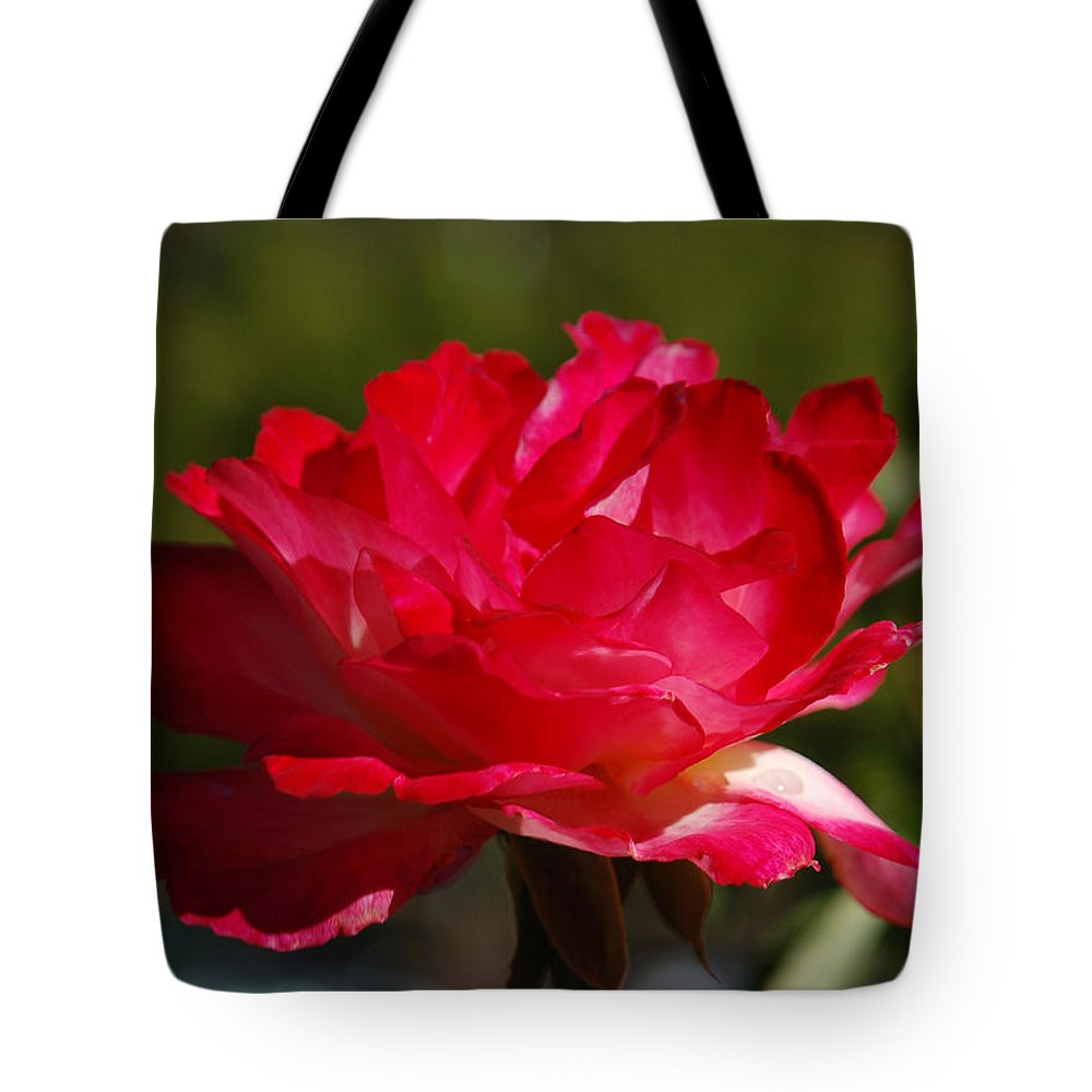 Floral Tote Bag featuring the photograph Fuchsia by Suzanne Gaff