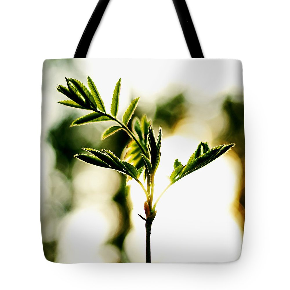 Spring Forest Tote Bag featuring the photograph Full Of Live 5 by Yevgeni Kacnelson