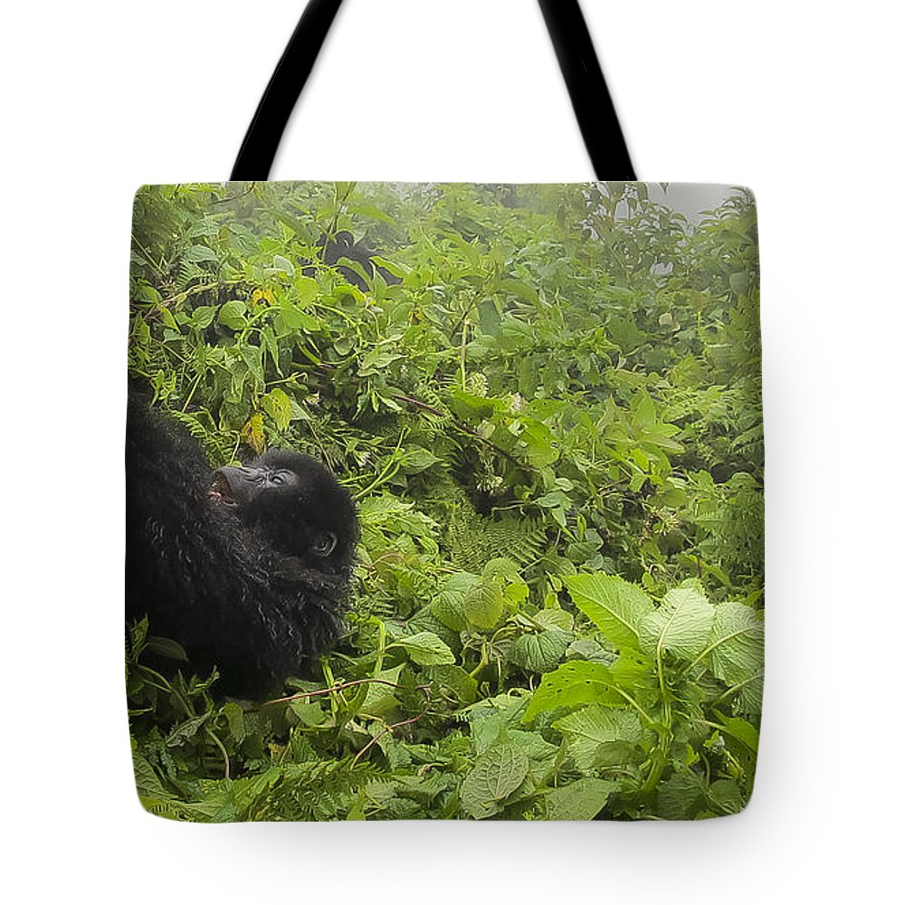 Rwanda Tote Bag featuring the photograph Fun Times In The Rainforest by Paul Weaver