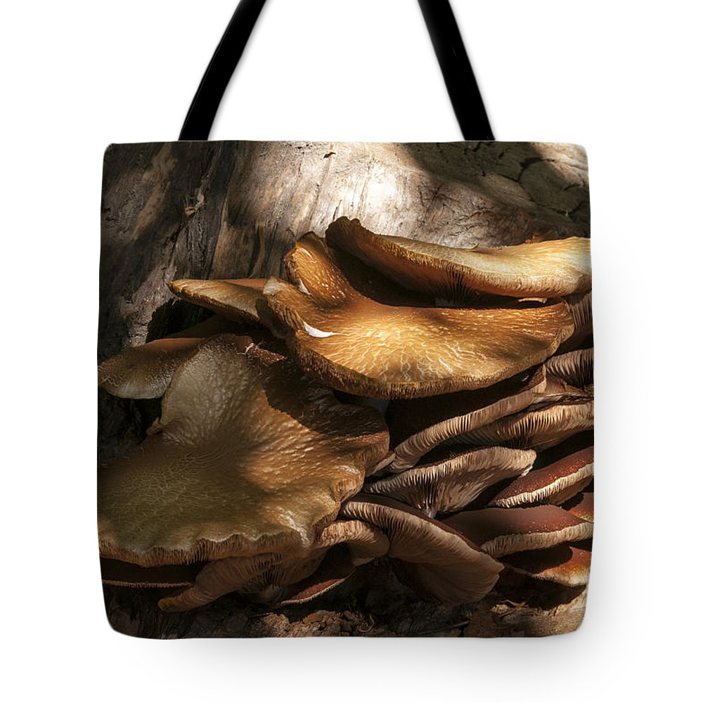 Les Alyscamps Cemetery Arles France Fungi Fungus Mushroom Mushrooms Nature Provence Tote Bag featuring the photograph Fungi by Bob Phillips
