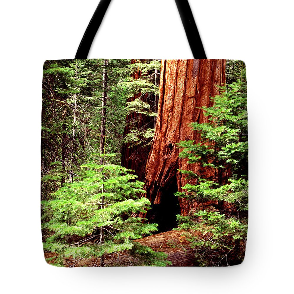 Sequoia Tote Bag featuring the photograph Future Giants by Paul W Faust - Impressions of Light
