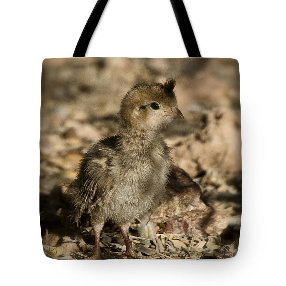 Gambel's Quail Tote Bag featuring the photograph Fuzzball by Saija Lehtonen