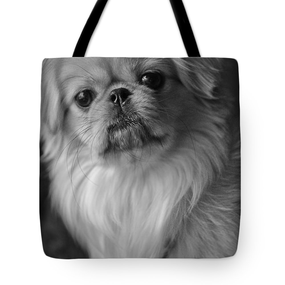 Pekingese Tote Bag featuring the photograph Fuzzface by Kristi Swift