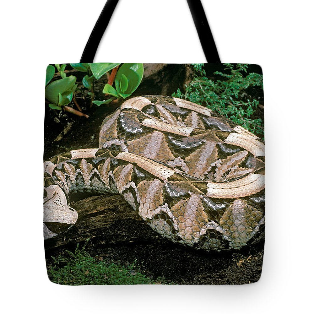 Wildlife Er Photographs Tote Bags