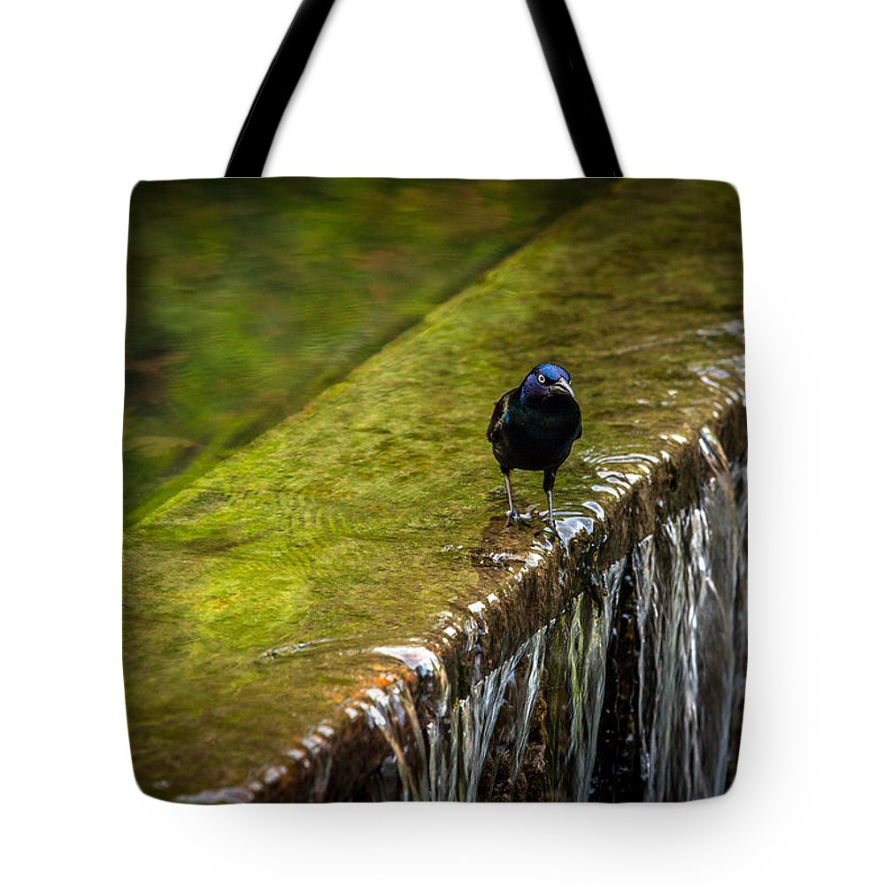 Common Gackle Tote Bag featuring the photograph Gackle 2 by Sennie Pierson