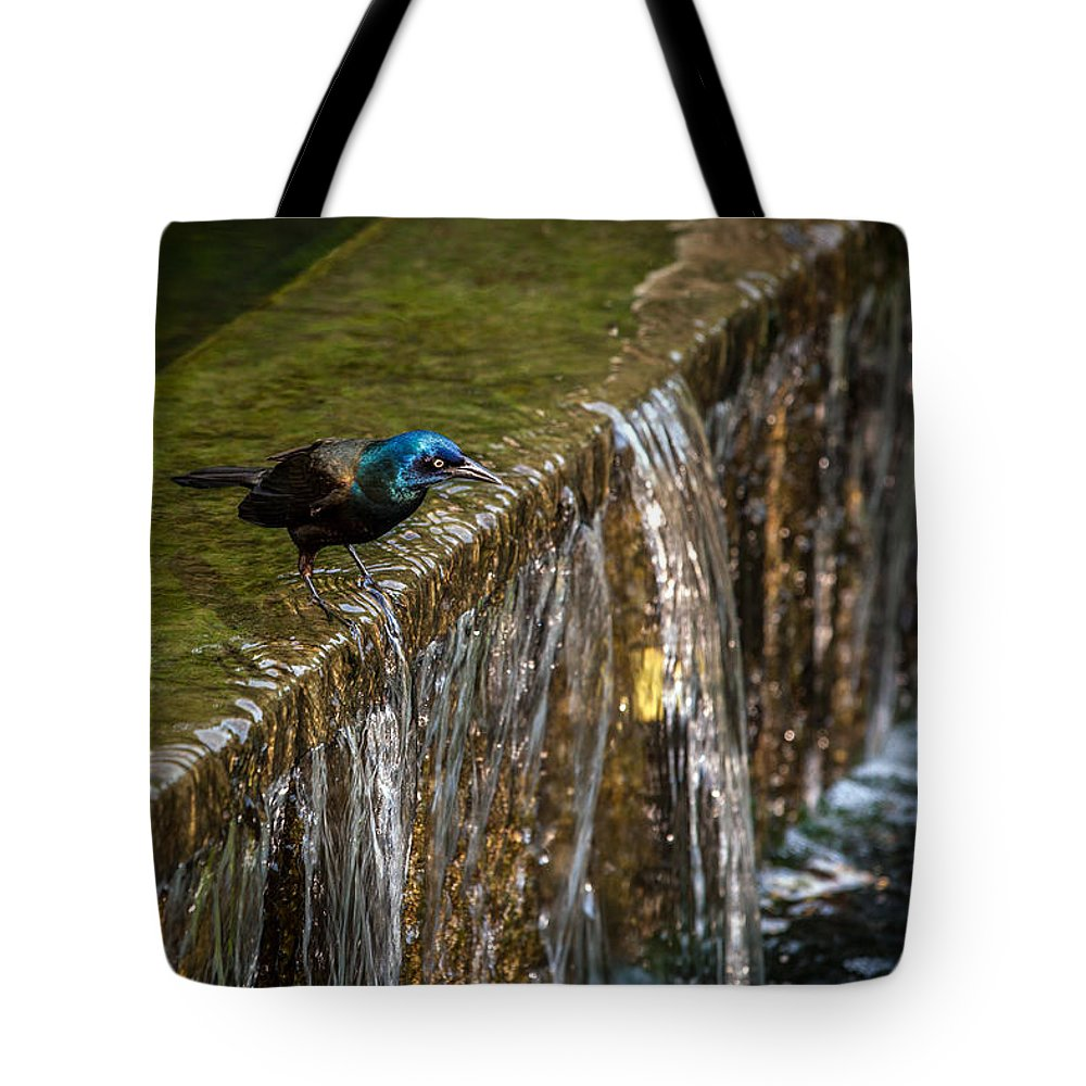 Common Gackle Tote Bag featuring the photograph Gackle 3 by Sennie Pierson