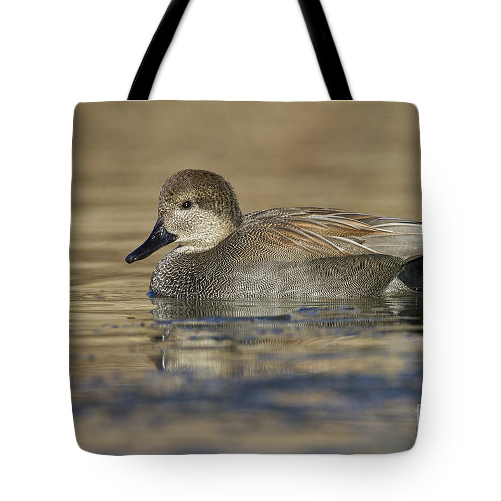 Gadwall Tote Bag featuring the photograph Gadwall On Icy Pond by Bryan Keil