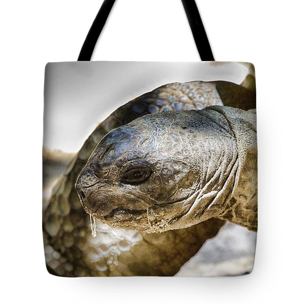 Galápagos Giant Tortoise Tote Bag featuring the photograph Galapagos Giant Tortoise V2 by Douglas Barnard