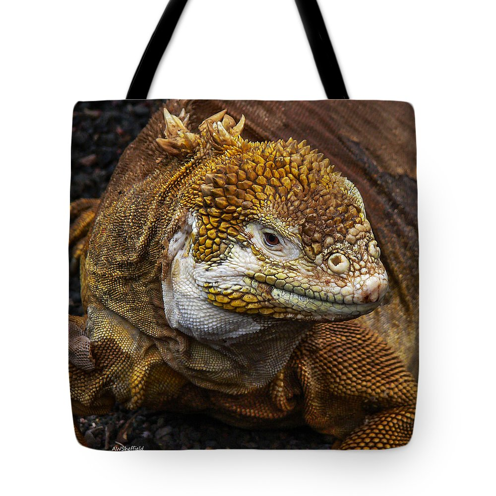 Galapagos Tote Bag featuring the photograph Galapagos Land Iguana by Allen Sheffield