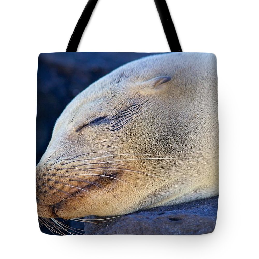 Sealion Tote Bag featuring the photograph Galapagos Sealion by Allan Morrison