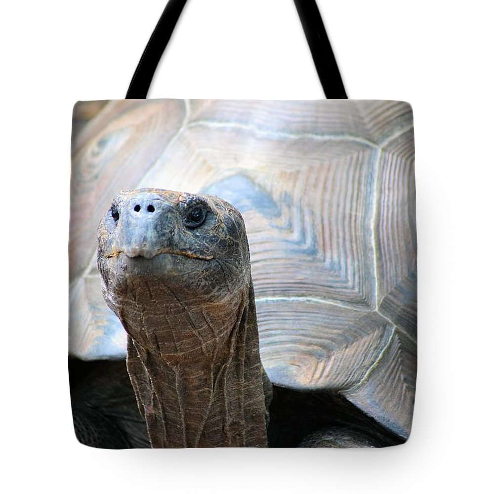 Galapagos Tortoise Tote Bag featuring the photograph Galapagos Tortoise 1 by Sheri McLeroy