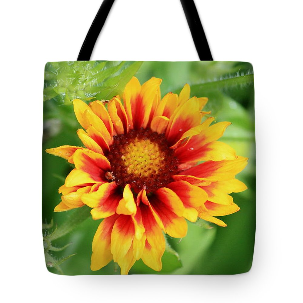 Galardia Tote Bag featuring the photograph Galardia by Kevin F Cook