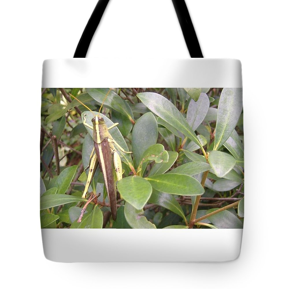 Grasshopper Tote Bag featuring the photograph Garden Hopper by Joi Lee