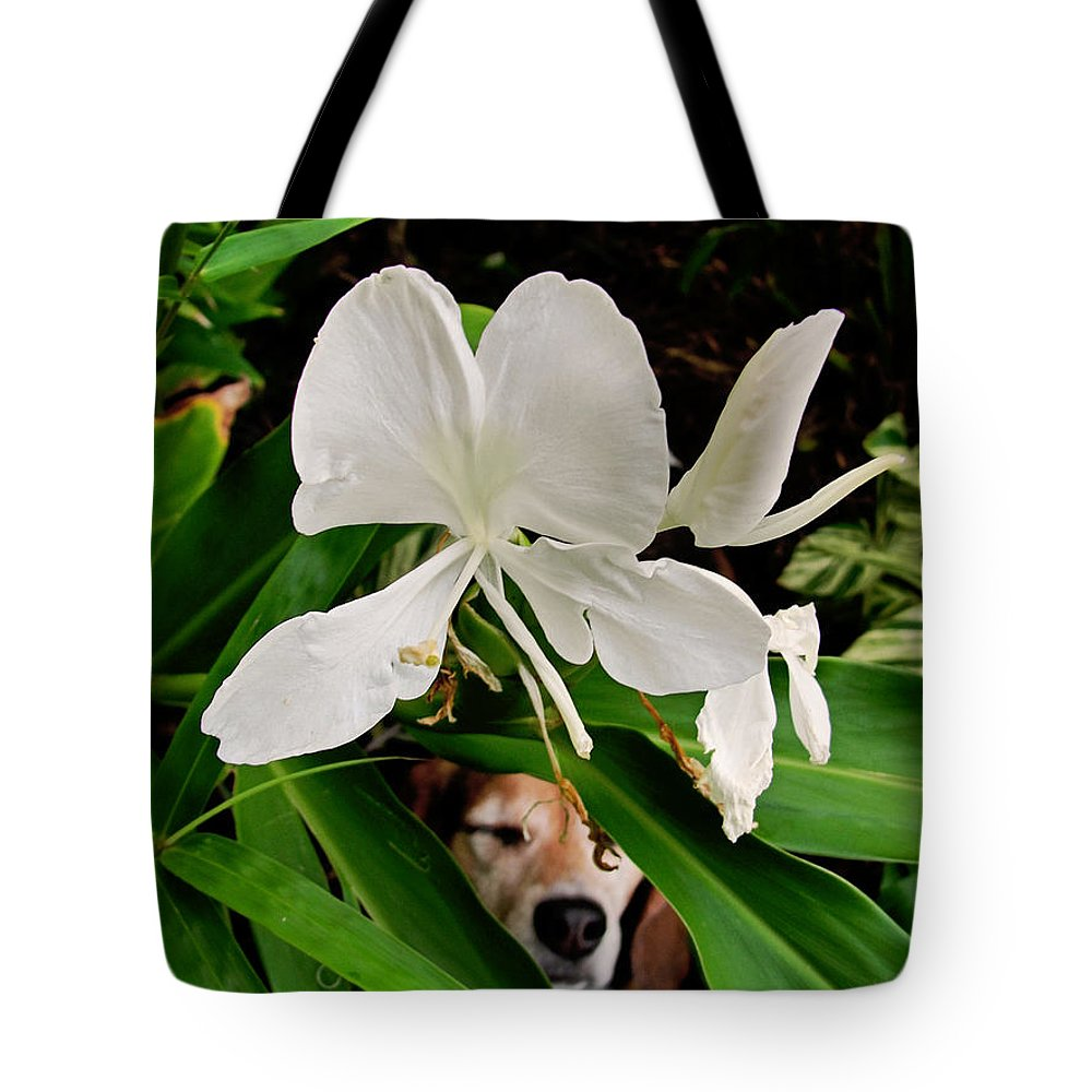Beagle Tote Bag featuring the photograph Garden Hound by TK Goforth